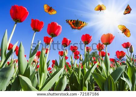 butterflies on flowers - stock photo