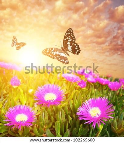 Butterflies over flower field. - stock photo
