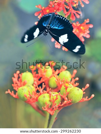Butterflies over the exotic tropical flower, Ecuador - stock photo