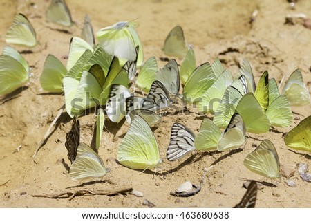 Swarm eat stock photos royalty free images vectors for Soil minerals