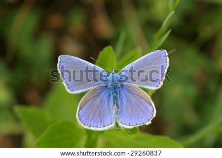 Butterfly - stock photo