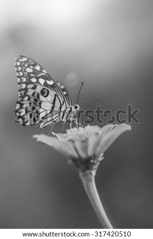 Butterfly and Beautiful flower , black and white