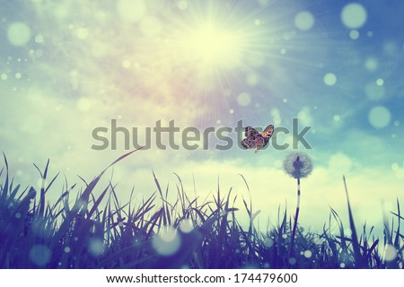 Butterfly and dandelion - stock photo