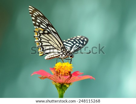 Butterfly and flower , thailand - stock photo