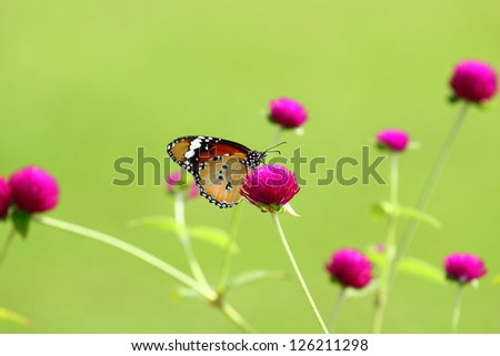 butterfly and flowers. - stock photo
