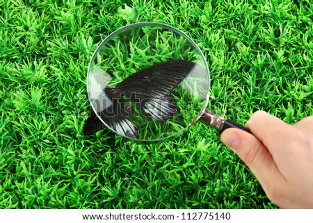 butterfly and magnifying glass in hand on green grass - stock photo