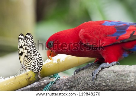 Butterfly and Parrot sharing food in Green House - stock photo