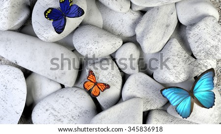 Butterfly and stones as background. A light blue butterfly in a zen garden with black sand. brown red and blue  butterflies on stone.  - stock photo