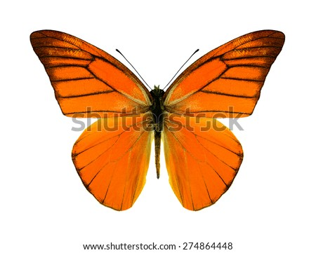 Butterfly Appias nero (male) on a white background - stock photo