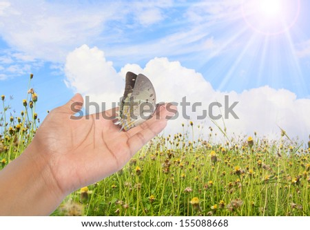 Butterfly are flying to Field of flowers.