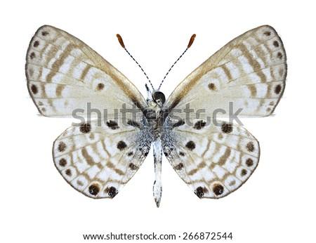 Butterfly Azanus jesous (male) (underside) on a white background - stock photo
