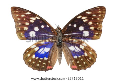 butterfly blue - stock photo