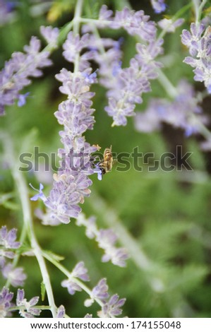 Butterfly Bush and Bee - stock photo