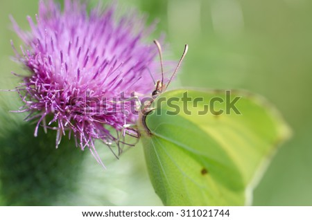 Butterfly, butterfly on a flower,  Micro