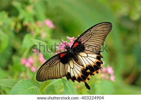 Butterfly. Butterfly on flower. Butterfly in tropical garden. Butterfly in nature. Butterfly, butterfly, butterfly.  - stock photo