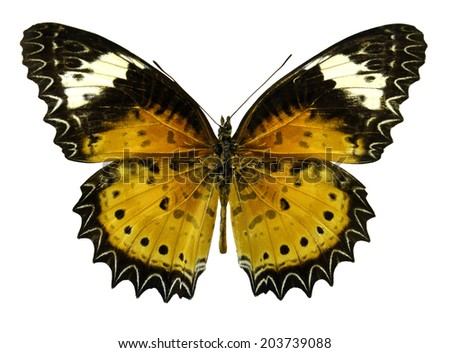 Butterfly China Cethosia cyane (Clipping path) - stock photo