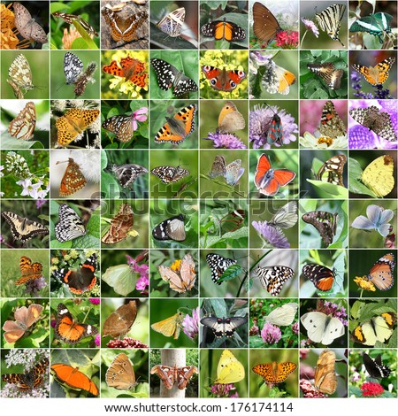Butterfly collage (all images belong to me) - stock photo