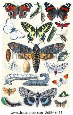 Butterfly collection, vintage engraved illustration. La Vie dans la nature, 1890.  - stock photo