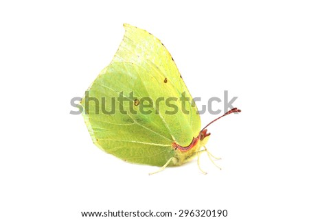 Butterfly - Common Brimstone (Gonepteryx rhamni) isolated on white - stock photo