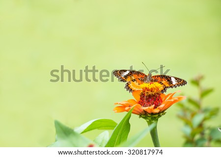 Butterfly eat the syrup on the flower. - stock photo