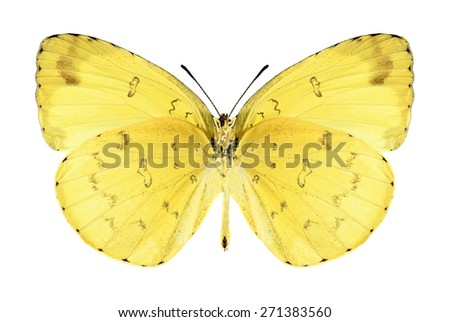 Butterfly Eurema blanda (male) (underside) on a white background - stock photo
