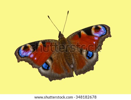 Butterfly European Peacock (Aglais io) on isolated background  - stock photo