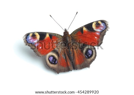 Butterfly - European Peacock (Inachis io)  isolated on white background - stock photo