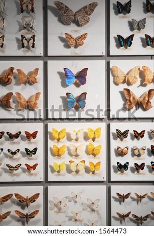 Butterfly exhibit - stock photo