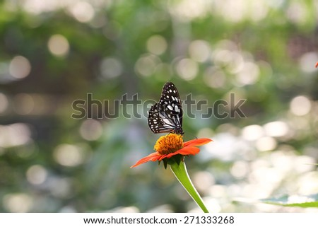 Butterfly fly in morning nature - stock photo