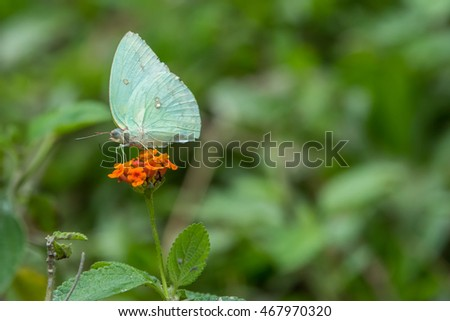 butterfly fly in morning nature , Close-up of butterfly , Butterfly with nature light