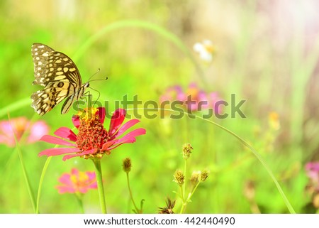 Butterfly fly on flower and warm light