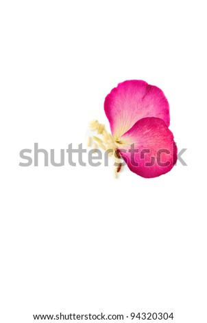 Butterfly from press rose flowers - stock photo
