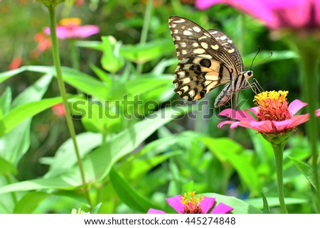 Butterfly frying on  flower