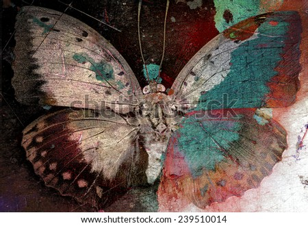 butterfly grunge image  - stock photo