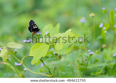 butterfly habitat in the wild