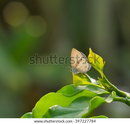 Butterfly hold on leaf