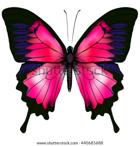 Butterfly. Illustration of beautiful red butterfly isolated on white background - stock photo