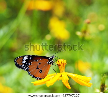 Butterfly in a field of flowers