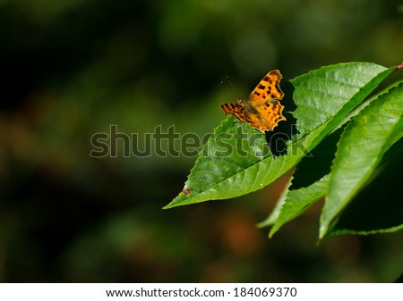 Butterfly in Cherry Tree - stock photo