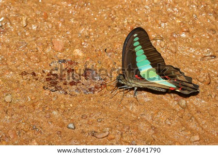 butterfly in forest   - stock photo