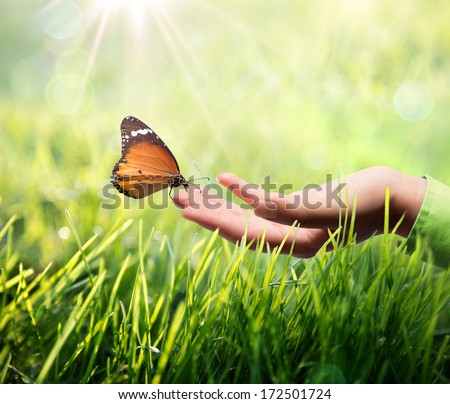 butterfly in hand on grass - stock photo