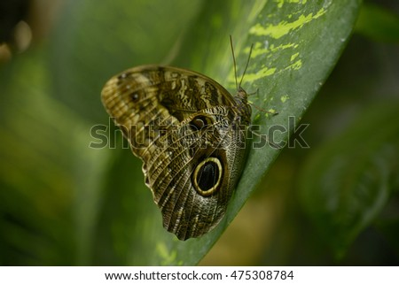 Butterfly in rainforest