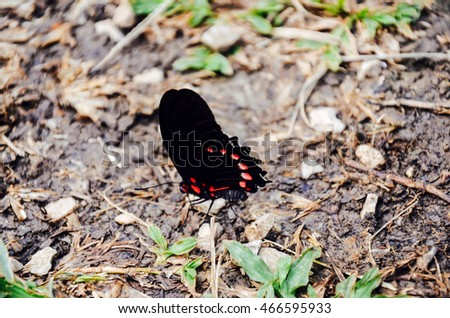 Butterfly in the forest, Lacandon Jungle, Chiapas, Mexico