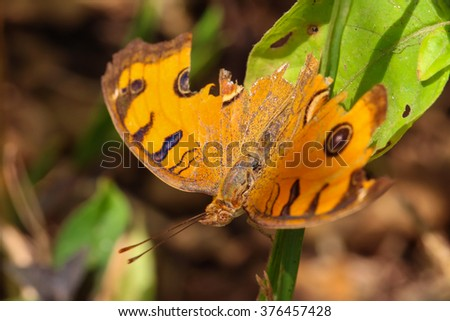Butterfly in the garden. - stock photo