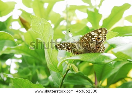 Butterfly in the leaves.