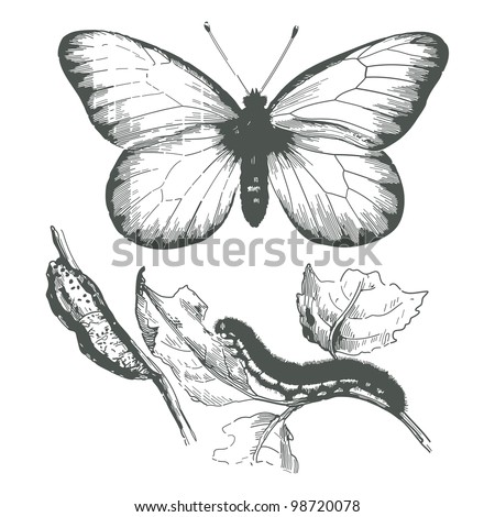 Butterfly ink drawing.Vector - stock photo