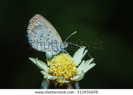 Butterfly, insect, macro Butterfly-eye-focus background blur - stock photo