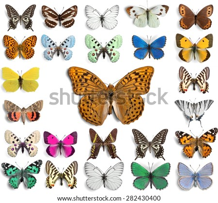 Butterfly, Insect, Wing. - stock photo