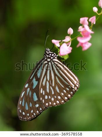 Butterfly, Malaysia - stock photo