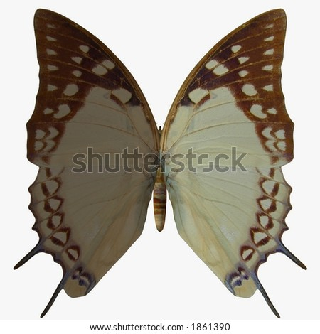 Butterfly-Nawab - stock photo